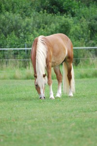 pferde 618